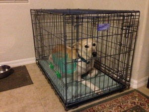 Inexpensive Crate Mat Solution For Our Dog S Cage A Bed She Hasn T